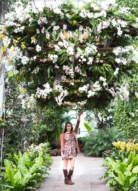 Go Inside The Orchid Show At The New York Botanical Garden | Orchid, Gardens  And Flower Power