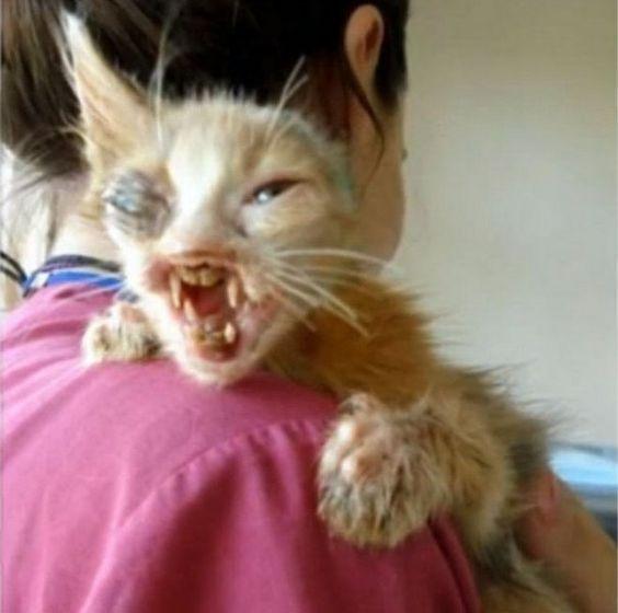 Ronda, a macska