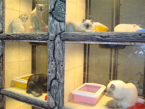 افضل محل بيع قطط بالرياض Cat Shop Home Appliances Box Fan