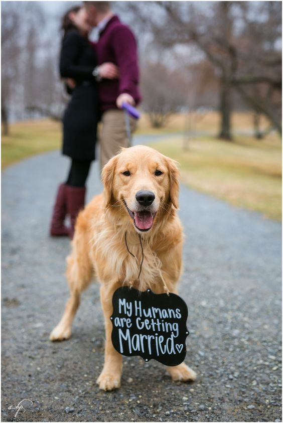 Winter Engagement Session. Dog. Golden Retriever. My Humans Are Getting Married. Riverside Park, Lynchburg, Va. April B Photography. www.aprilbphotography.com