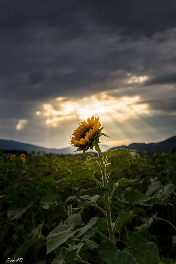 A sunny star in the light by Stefanie Raab on 500px