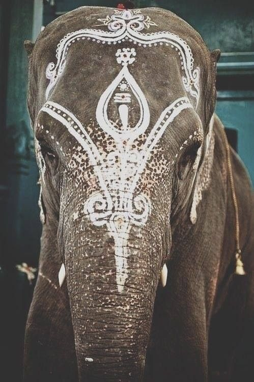 Beautiful elephant