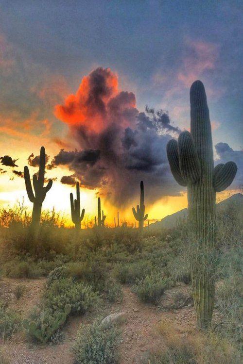 Lens Perspectives The Light Is Rising Arizona Max Rive Desert Sunset Arizona Sunset Beautiful Landscapes