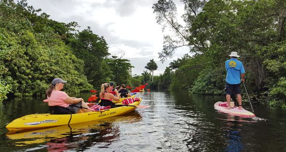 A Fort Lauderdale kayaking tour - navigating the Middle River with Atlantic Coast Kayak. An eco-tour set in an urban landscape.