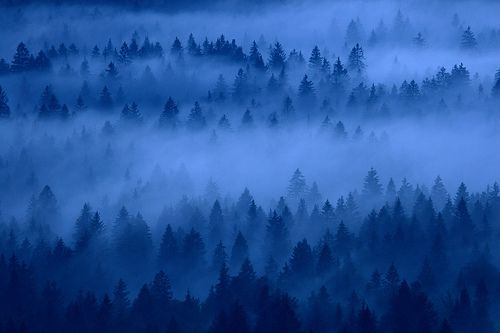 mistic forests by mk_lynx, via Flickr