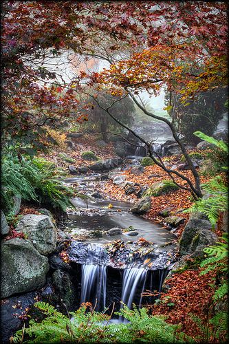 autumn, Beacon Hill Park, James Bay, Victoria, British Columbia, Canada