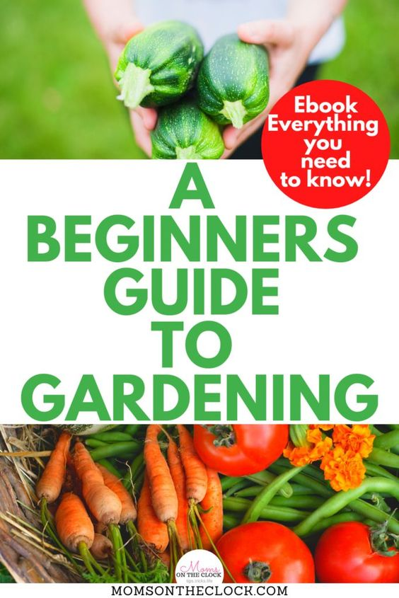 How to Grow a Vegetable Garden for Beginners! This ebook shows all the gardening ideas with garden designs. It is full of the best gardening tips ever!! It has all the garden planning set up for you with each vegetable so know what you're doing in your garden project. You will love this gardening ebook! - Moms On The Clock #GardeningTips #GardenIdeas #GardeningForBeginners