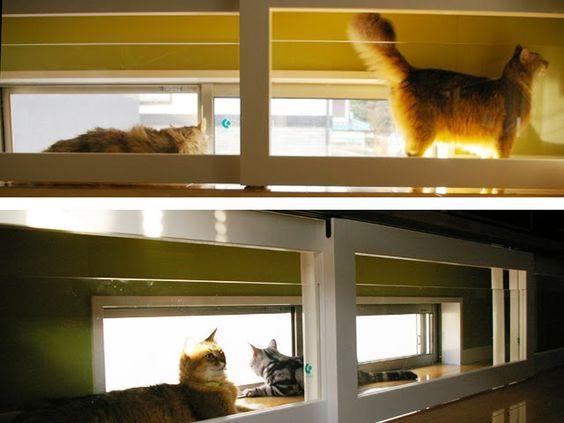 Cat Friendly House Design Cat 39 S World Pinterest