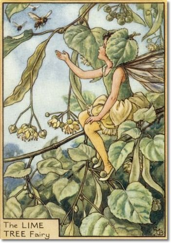 Cicely Mary Barker - Fairies of the Trees - The Lime Tree Fairy Archival Fine Art Paper Print: