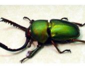 Beetles are so cool - for Connor