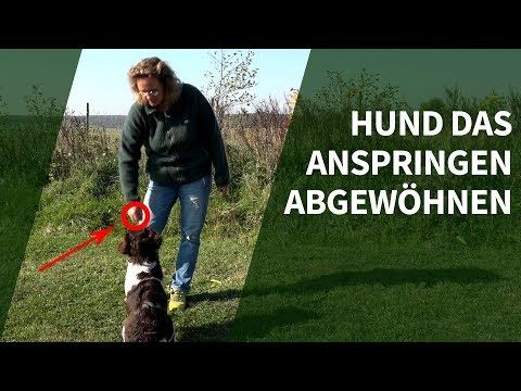 Hund Das Anspringen Abgewohnen Praxisvideo Hunde Trainieren Youtube Hunde Hunde Erziehen Aufgeregter Hund