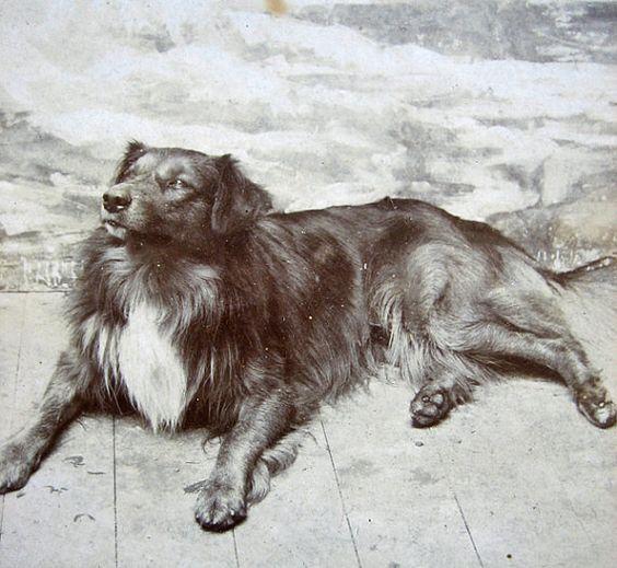 Antique dog carte de visite large size 1800s by DogDayAfternoons, $28.00