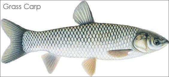 Pin On La Pescuit