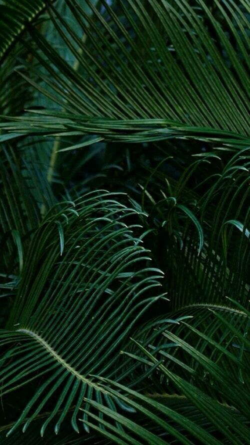 Green Leaves Plant Wallpaper Green Nature Green Aesthetic