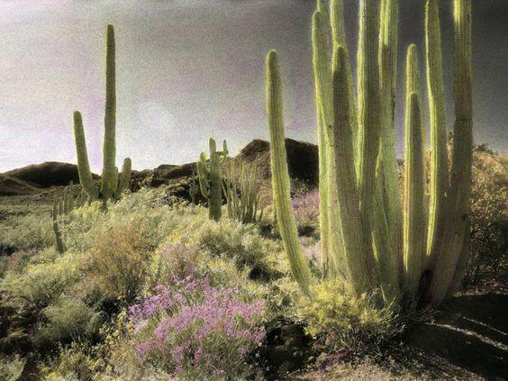 Piante del deserto