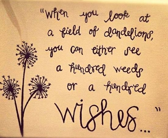 Image result for dandelion quotes