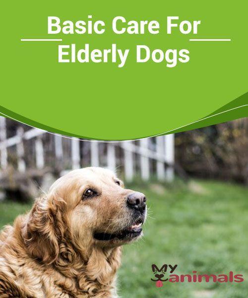 Basic Care For Elderly Dogs Elderly Dogs