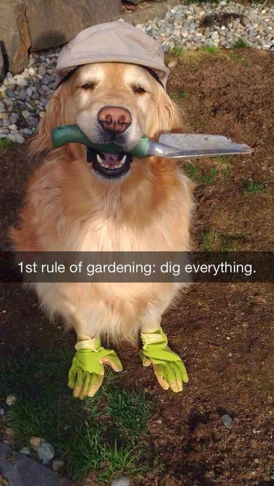 Dig. Everything! This dog knows what he's doing in the garden!