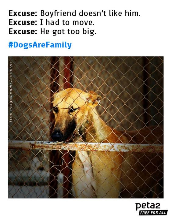 Dogs Are Family | Take Action | peta2.com