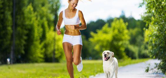 caminhada com cachorro - Pesquisa Google