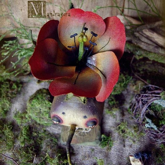 """Маленькая коллекция """"Луковичные"""" . Все цветочные существа будут искать дом на Весеннем балу .   #мандрагоринычудовища #весеннийбал2017 #существа #луковичныерастения #цветы #нарцисс #гиацинт #тюльпан #creatures #mandradora #floral"""