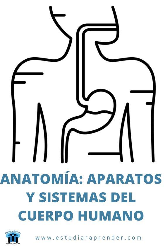 anatomia aparatos y sistemas del cuerpo humano