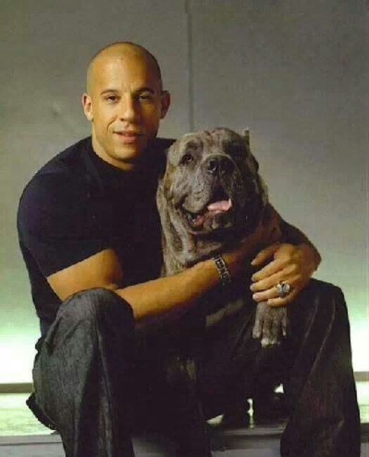 Vin Diesel Schone Hunde Grosse Hunde Und Hunde Rottweiler Price How Much Is This Loyal And Lovable Giant 10 Best Healthiest Dog Foo In 2020 Cane Corso Corso Dog Dogs