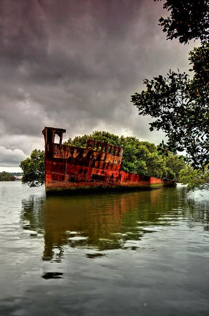 102-Year-Old Ship in Sydney Became A Floating Forest