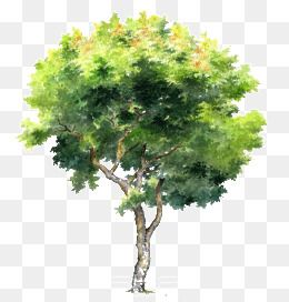 Millions Of Png Images Backgrounds And Vectors For Free Download Pngtree Tree Photoshop Watercolor Trees Tree Watercolor Painting