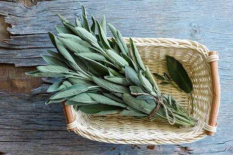 Salvia: come usarla per stare meglio e per la bellezza di pelle e capelli - greenMe