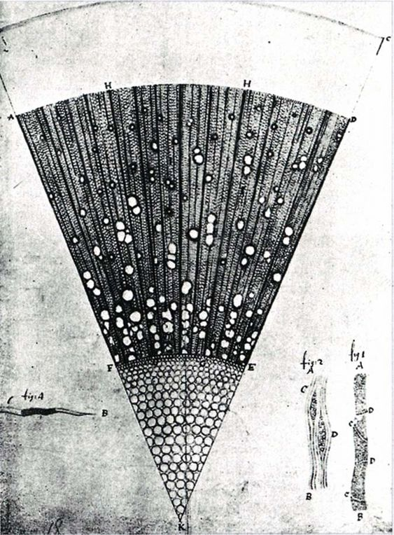 Leeuwenhoek Eschenholz - アントニ・ファン・レーウェンフック - Wikipedia
