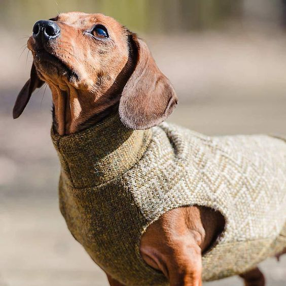 dachshund gloucester zig zag jumper by redhound for dogs | notonthehighstreet.com