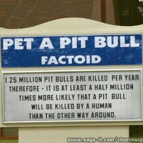 xxxxbyrdxxxx:    #pitbull #dogs (Taken with instagram)