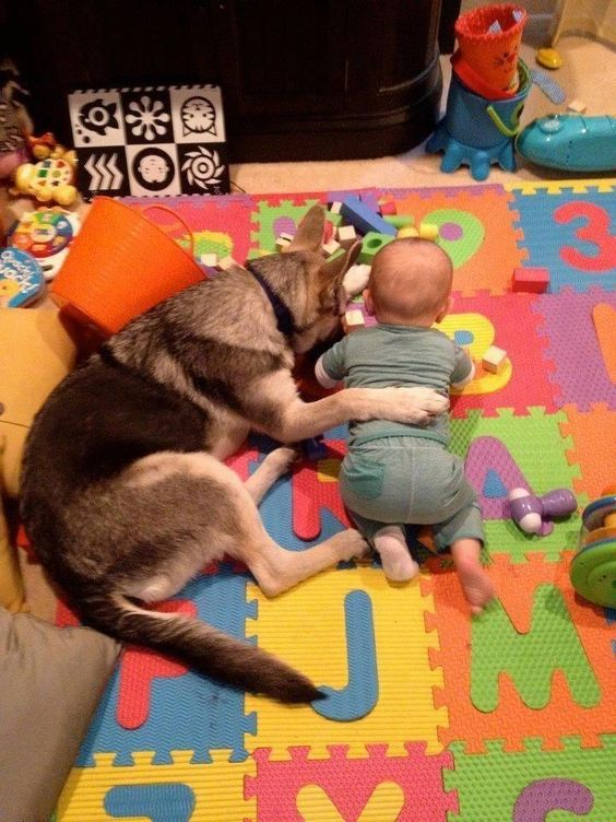 How sweet! #dog and baby