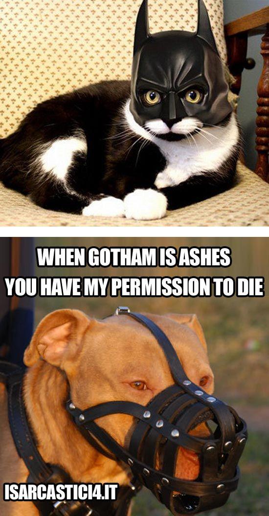 batman joker meme catwoman - photo #36