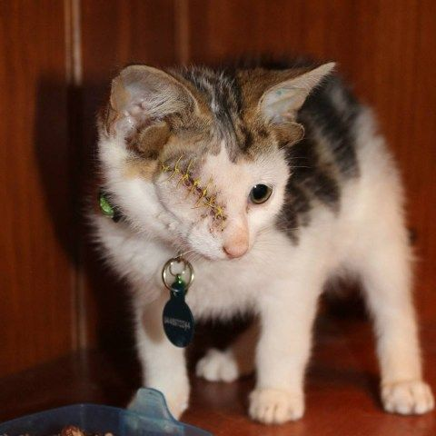 Rescued Kitten With Four Ears And One Eye Finds A Forever Home