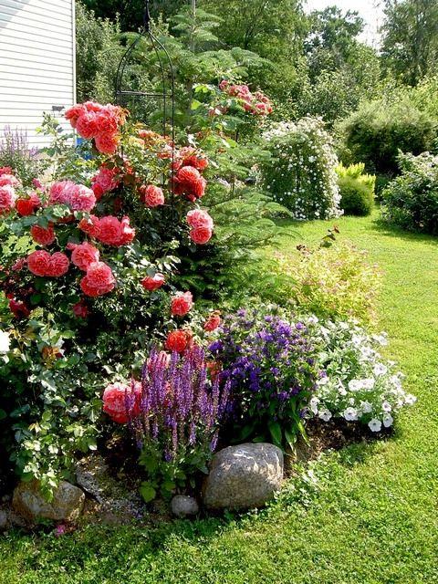 Pin By Sanja Sanjarina On Ogrod Pretty Flowers Photography Flower Garden Plants