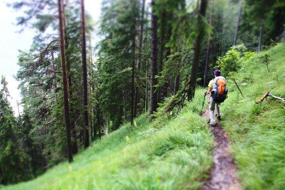 Durch den Wald hinauf zum Rißsattel.
