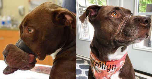 Aleksy In 2020 Rescue Dogs Akita Dogs