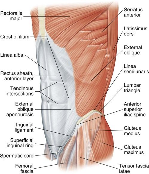 20+ Where is the groin located in human body inspirations