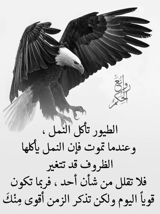Pin By فلسطينية ولي الفخر On روائع الحكم Bald Eagle Arabic Words Words