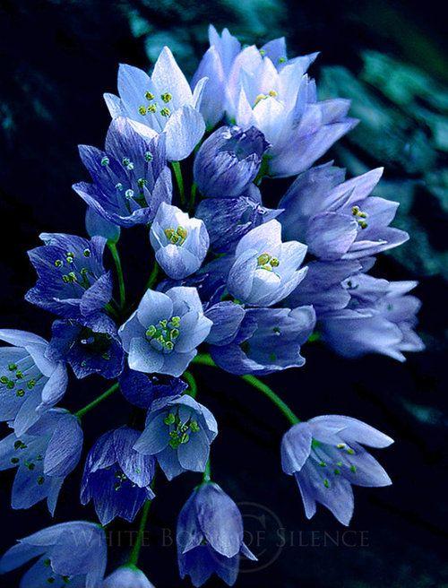 Provestra flower:
