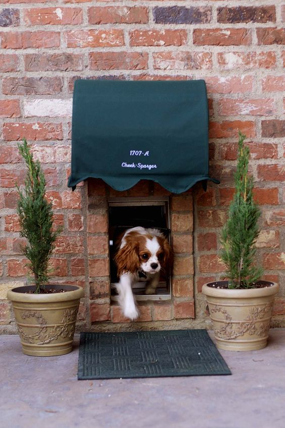 He has his own door with awning! :) cavaliers are the best!