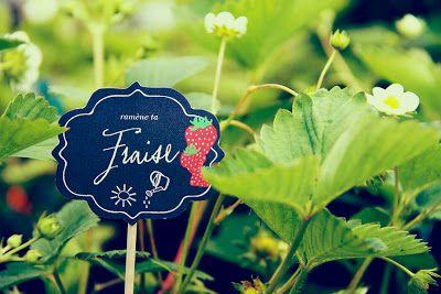 Des étiquettes pour votre jardin