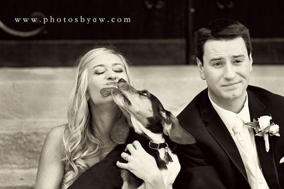 bride with her dog - wedding puppy - dog kisses bride - ©Copyright 2016 Photography by Amanda Wilson