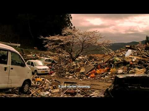 THE TSUNAMI AND THE CHERRY BLOSSOM by Lucy Walker and Kira Carstensen