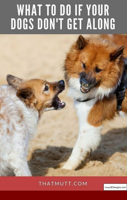 Train A Dog To Stop Barking At Strangers And Pics Of How Do You Train A Dog Not To Bark When You Leave Aggressive Dog Training Your Dog Dog Training Obedience