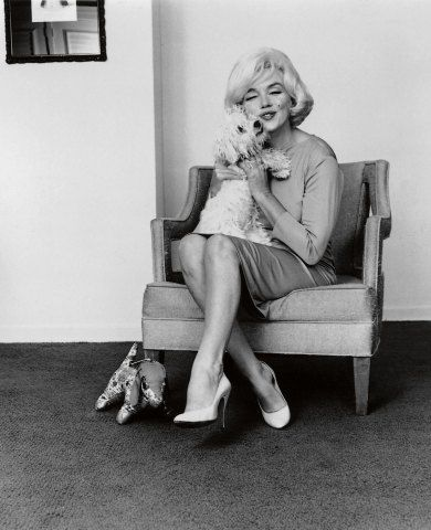 Marilyn Monroe with her Maltese, Maf, in 1961. Maf, short for 'Mafia', was Monroe's last dog, and was given to her by Frank Sinatra.:
