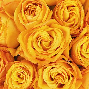 FiftyFlowers.com - Golden Rod Yellow Rose