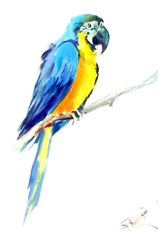 Thinking on the Wing | The Parrot University, llc |Blue Macaw Parrot Flying